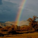 Color: An Unexpected Ally in Healing and Support
